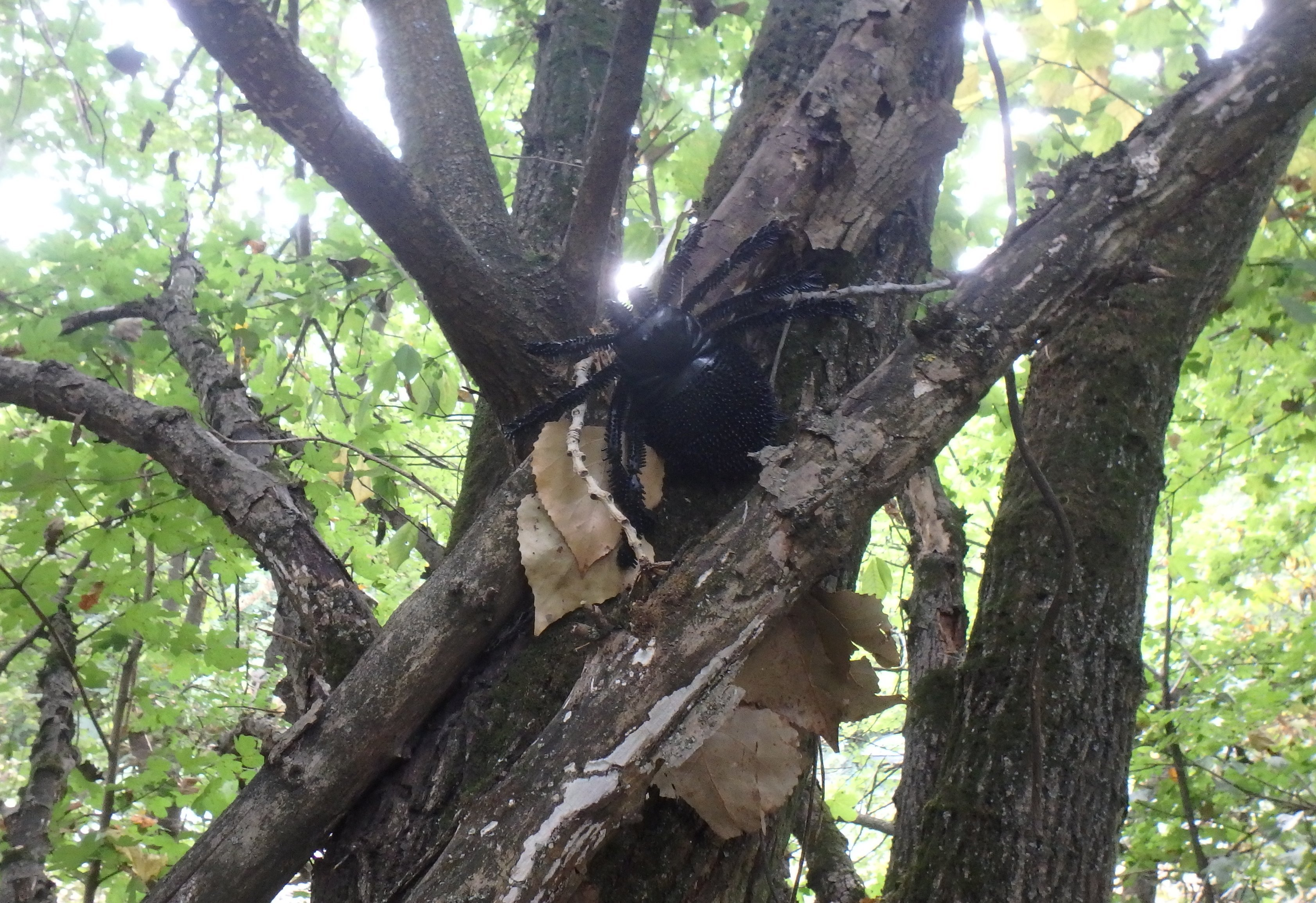 Spider geocache up in the tree - itstartswithacoffee.com #spider #geocache #geocaching #geocachingHungary #geocachinghide #ihideit #petling