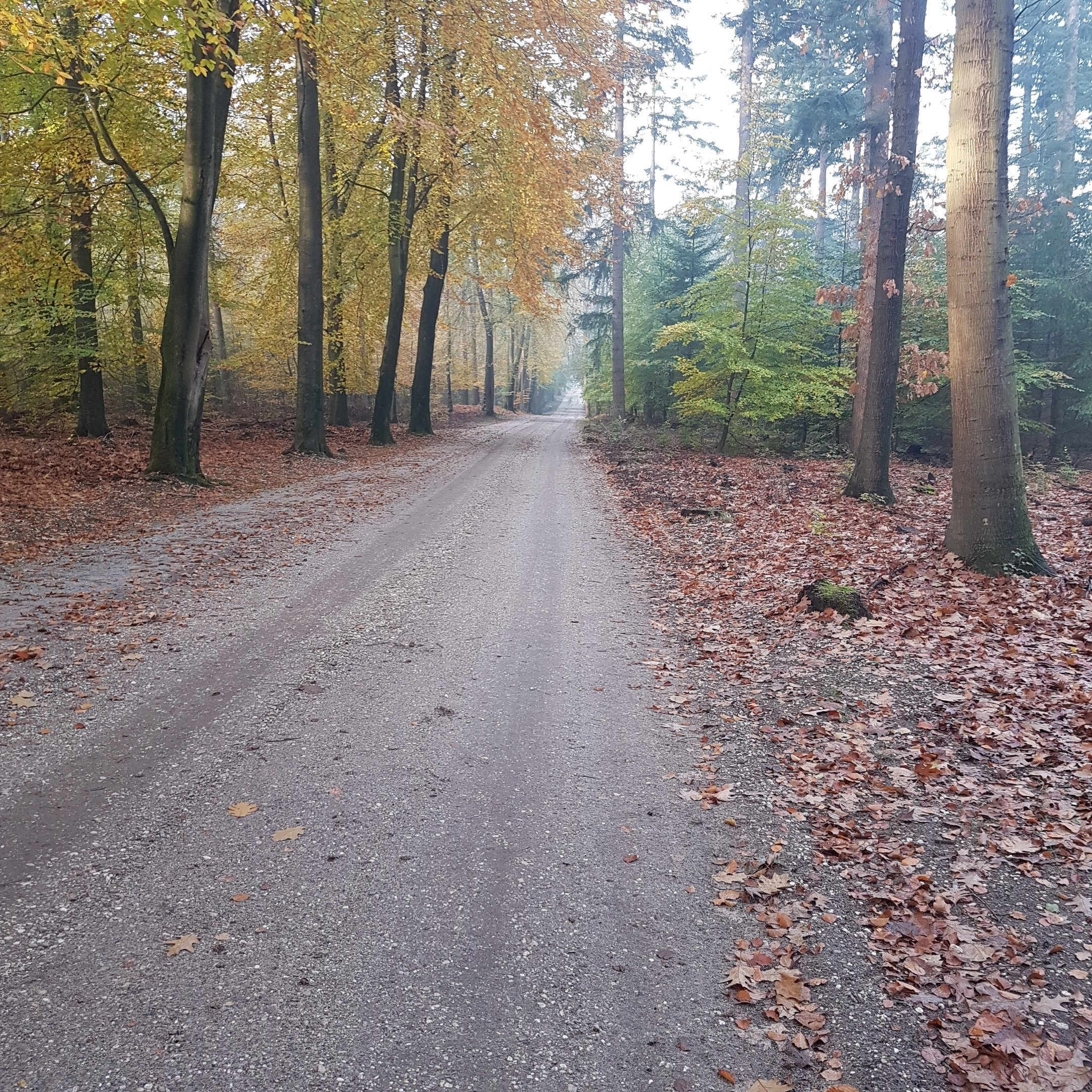 The road to the geocache - itstartswithacoffee.com #geocache #geocaching #geocachingNL #geocachingNetherlands #geocachingfun