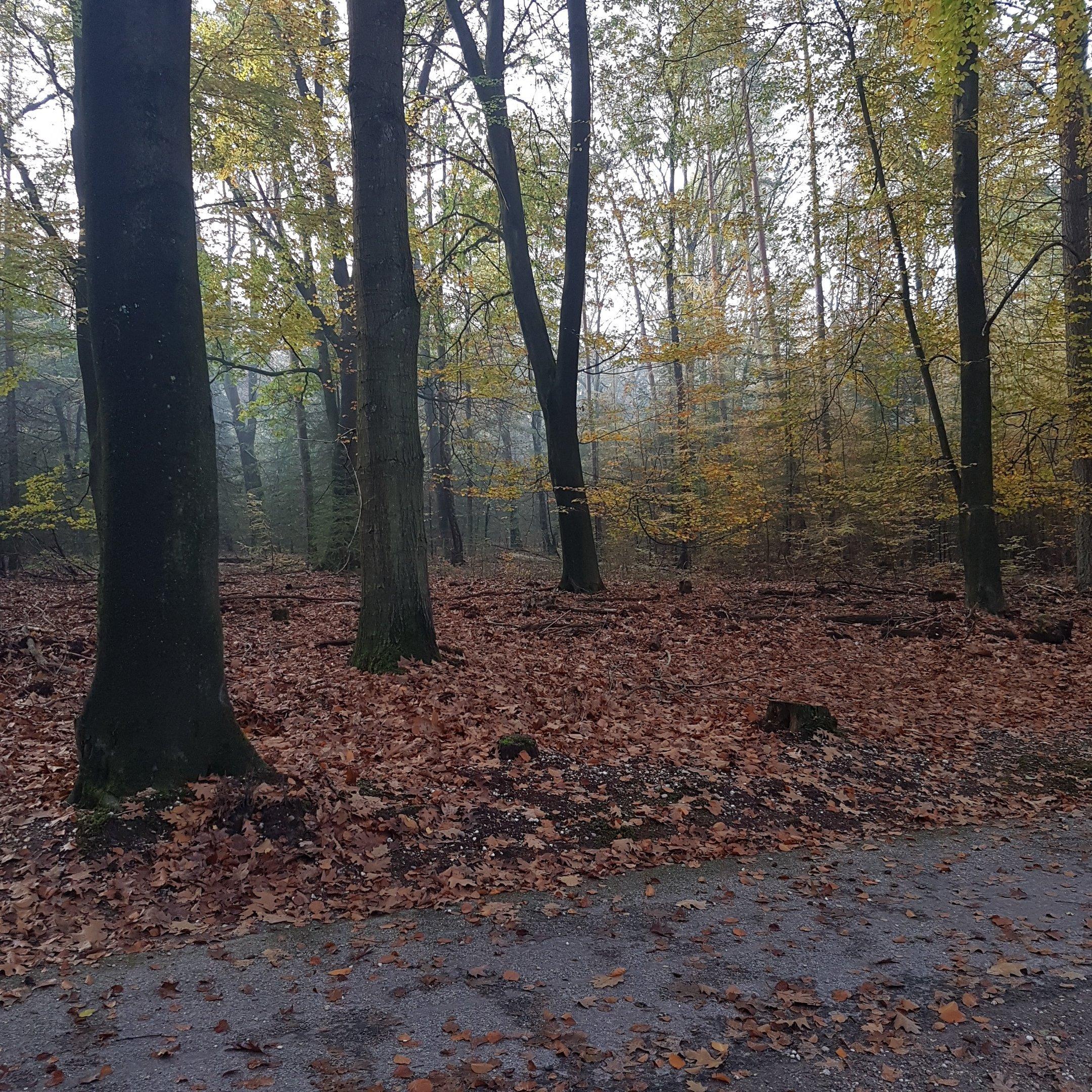 The autumn scenery in Veluwe - itstartswithacoffee.com #geocache #geocaching #geocachingNL #geocachingNetherlands #geocachingfun #Veluwe