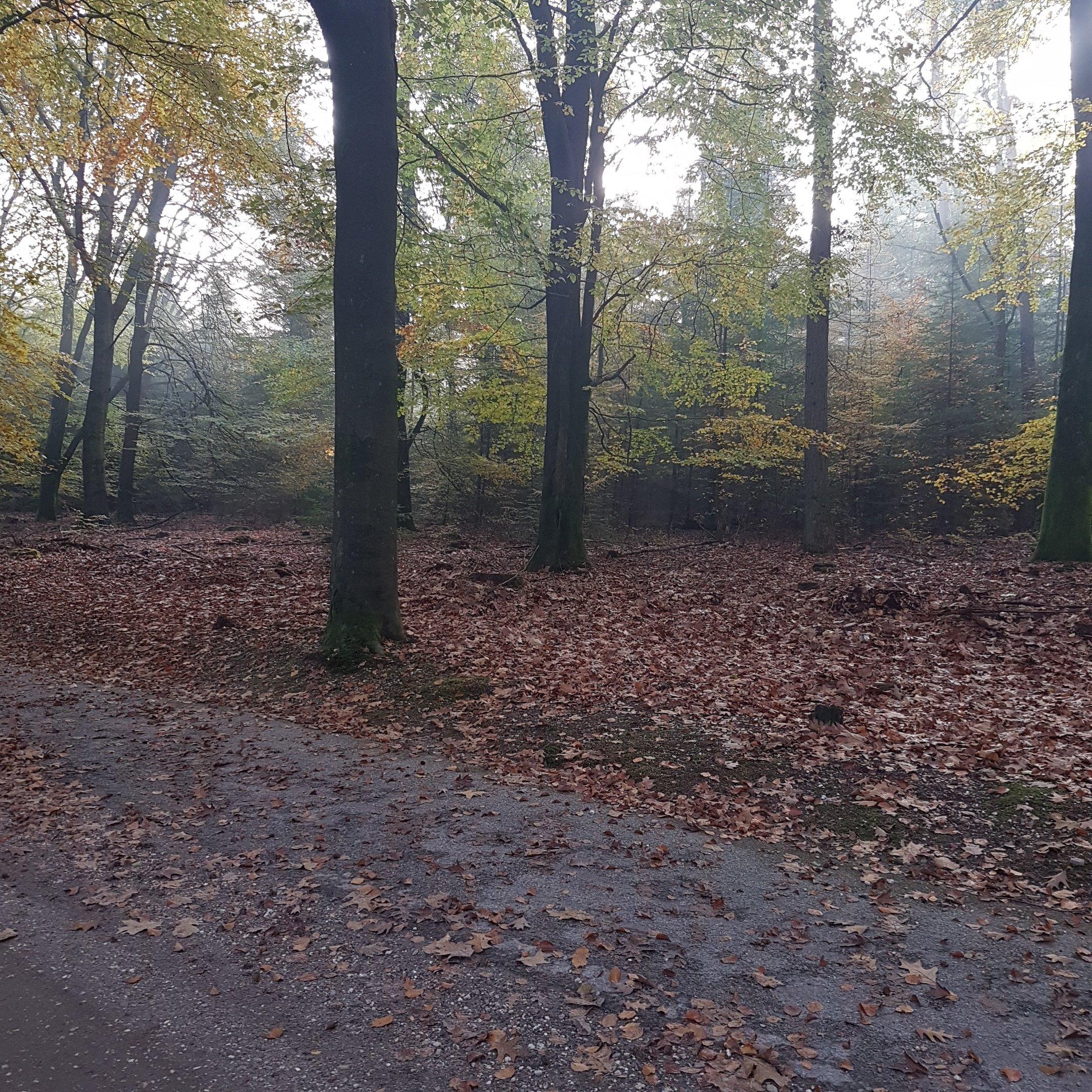 The autumn scenery in Veluwe 2 - itstartswithacoffee.com #geocache #geocaching #geocachingNL #geocachingNetherlands #geocachingfun #Veluwe