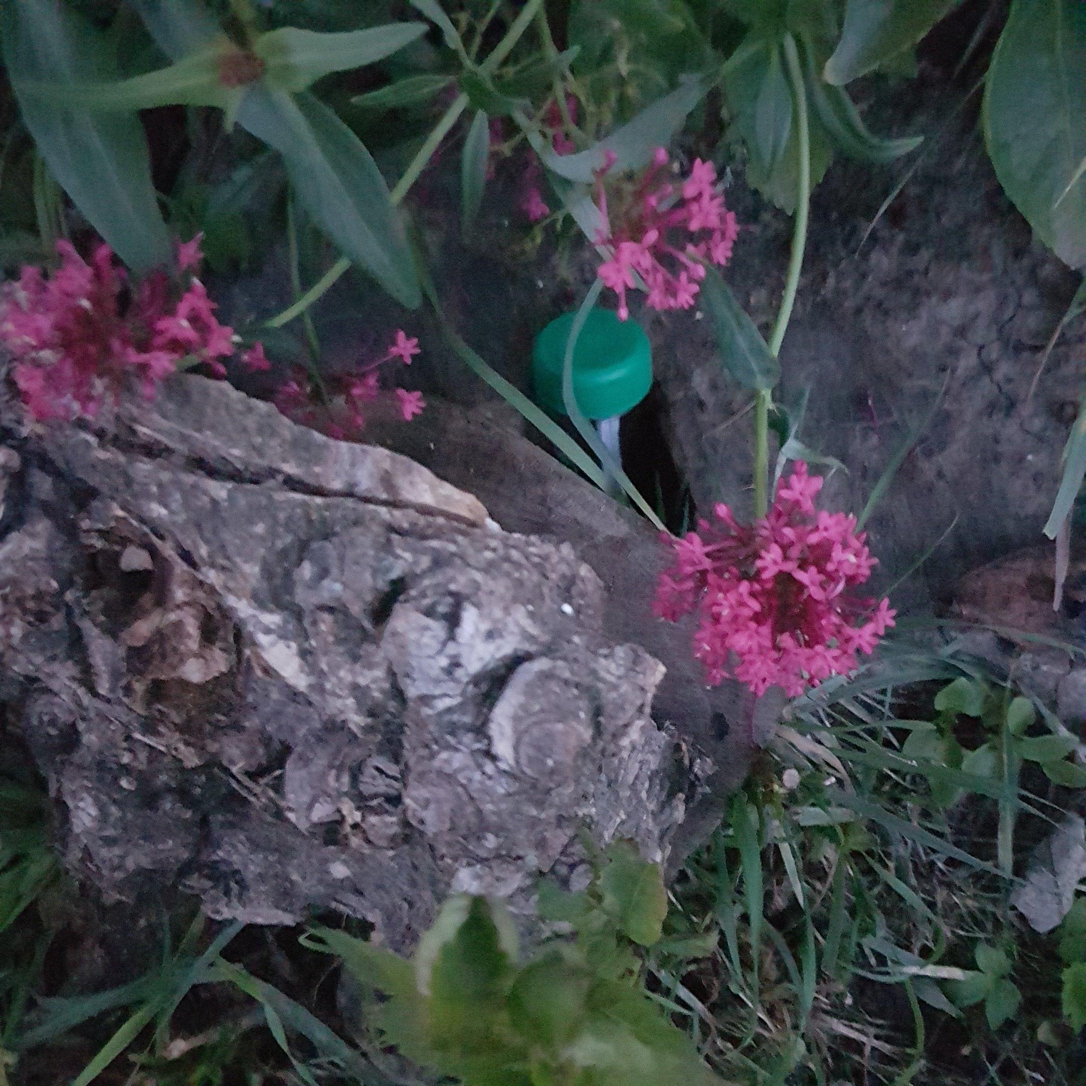 The geocache hiding behind - itstartswithacoffee.com #geocache #geocaching #geocachingNL #geocachingNetherlands #petling #PETpreform