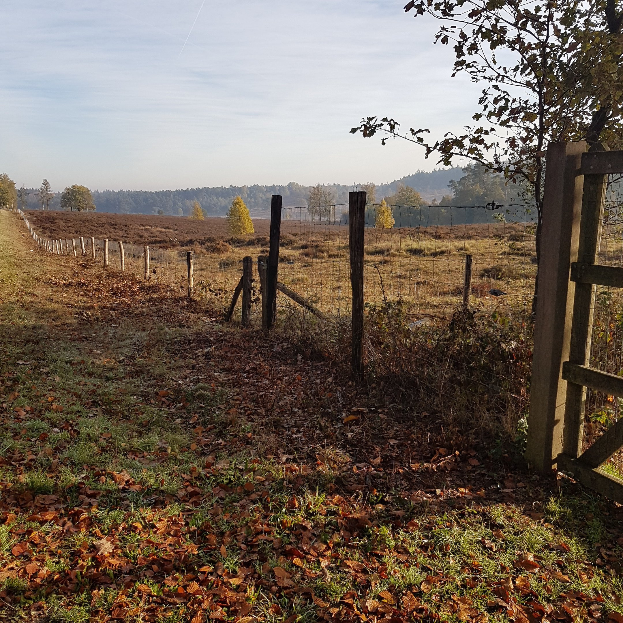The view from the geocache at the gate - itstartswithacoffee.com #geocache #geocaching #geocachingNL #geocachingNetherlands #geocachingfun