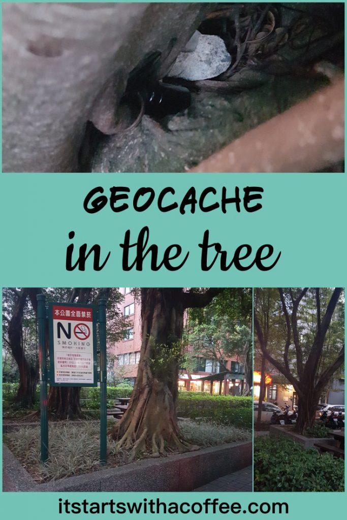 Geocache hidden in the tree - itstartswithacoffee.com #geocache #geocaching #geocachingTW #geocachingTaiwan #taiwan #Taipei